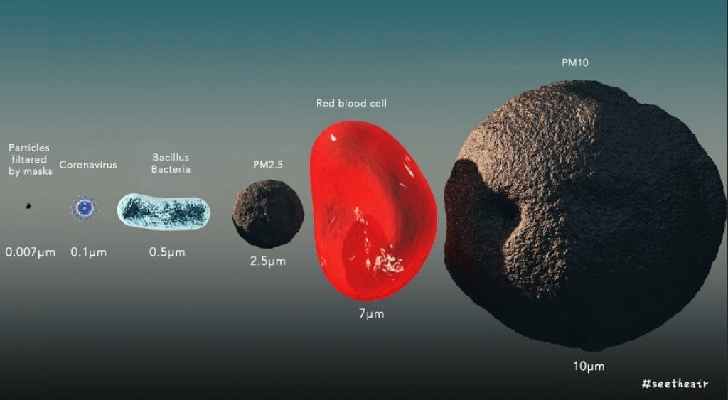 microorganisms size comparison in micron