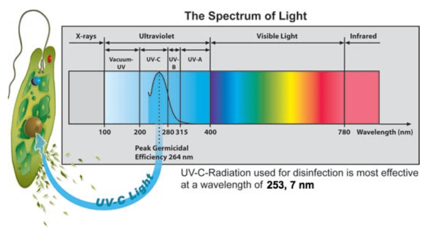 The spectrum of light. Which wavelength is most effective for disinfection.